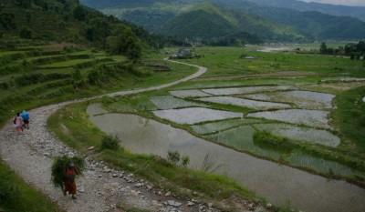 Сезон дождей только начался, а рис уже высажен